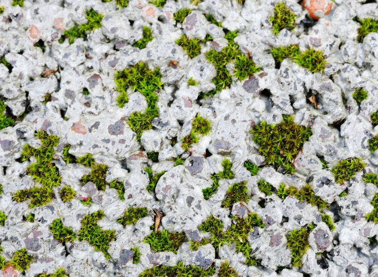 Polster_Büscher_Riehl_Klussmann_RCA_2018_Botanical_Concrete.jpg